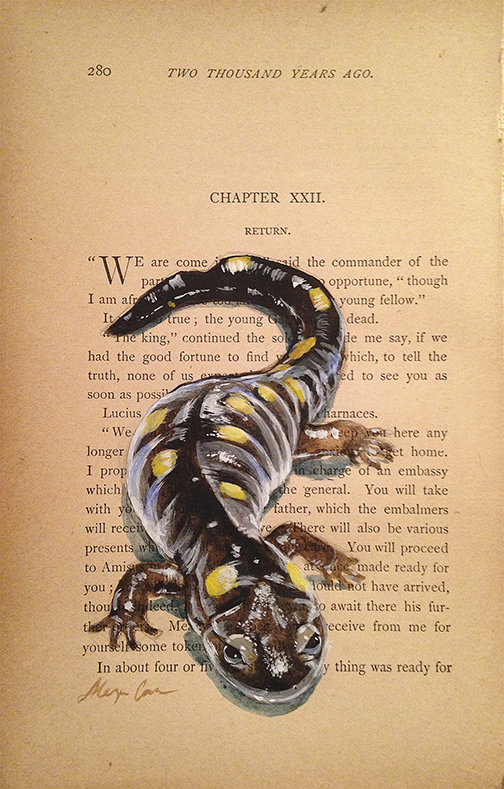 salamander_web.jpg