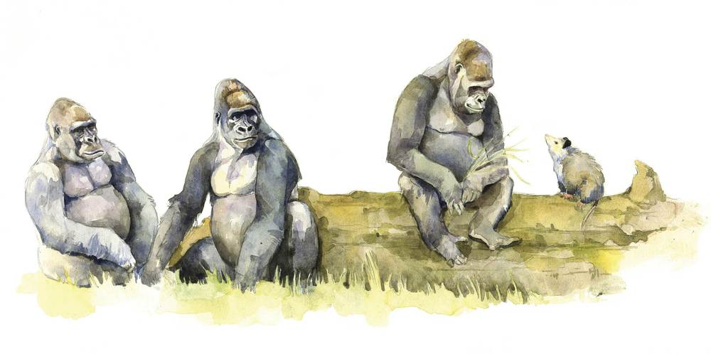 Gorillas-web.jpg