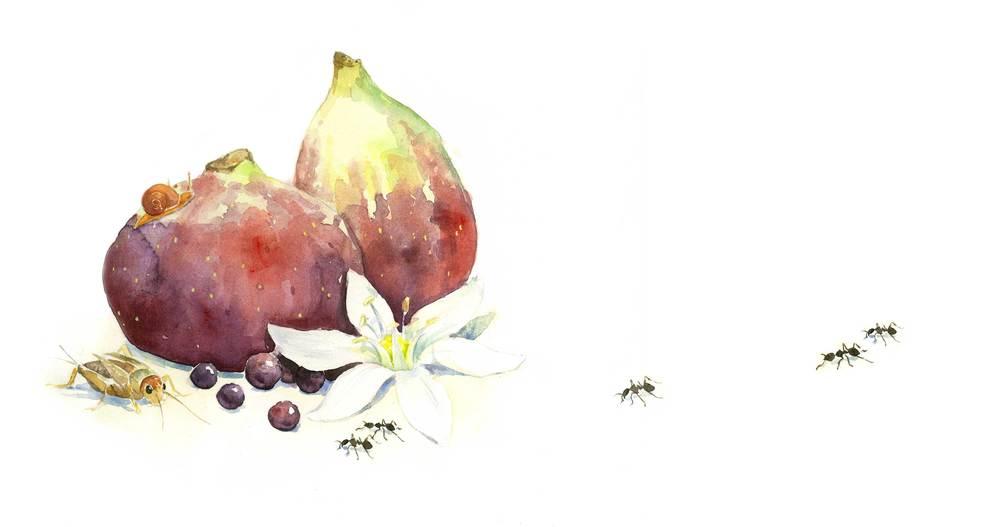 figs-web.jpg