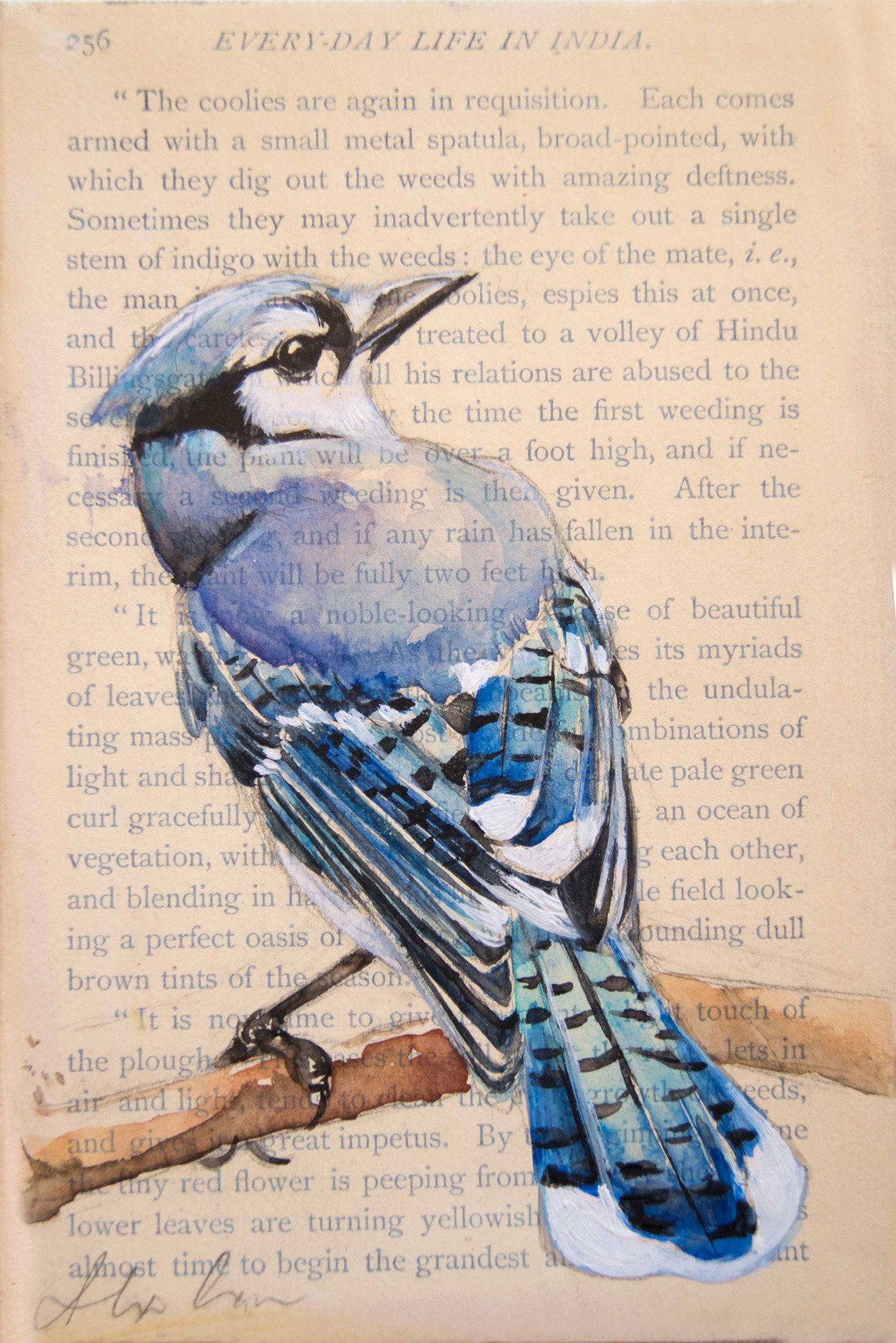 4x6″Blue Jay. Watercolor, pencil and gesso on antique paper on canvas.