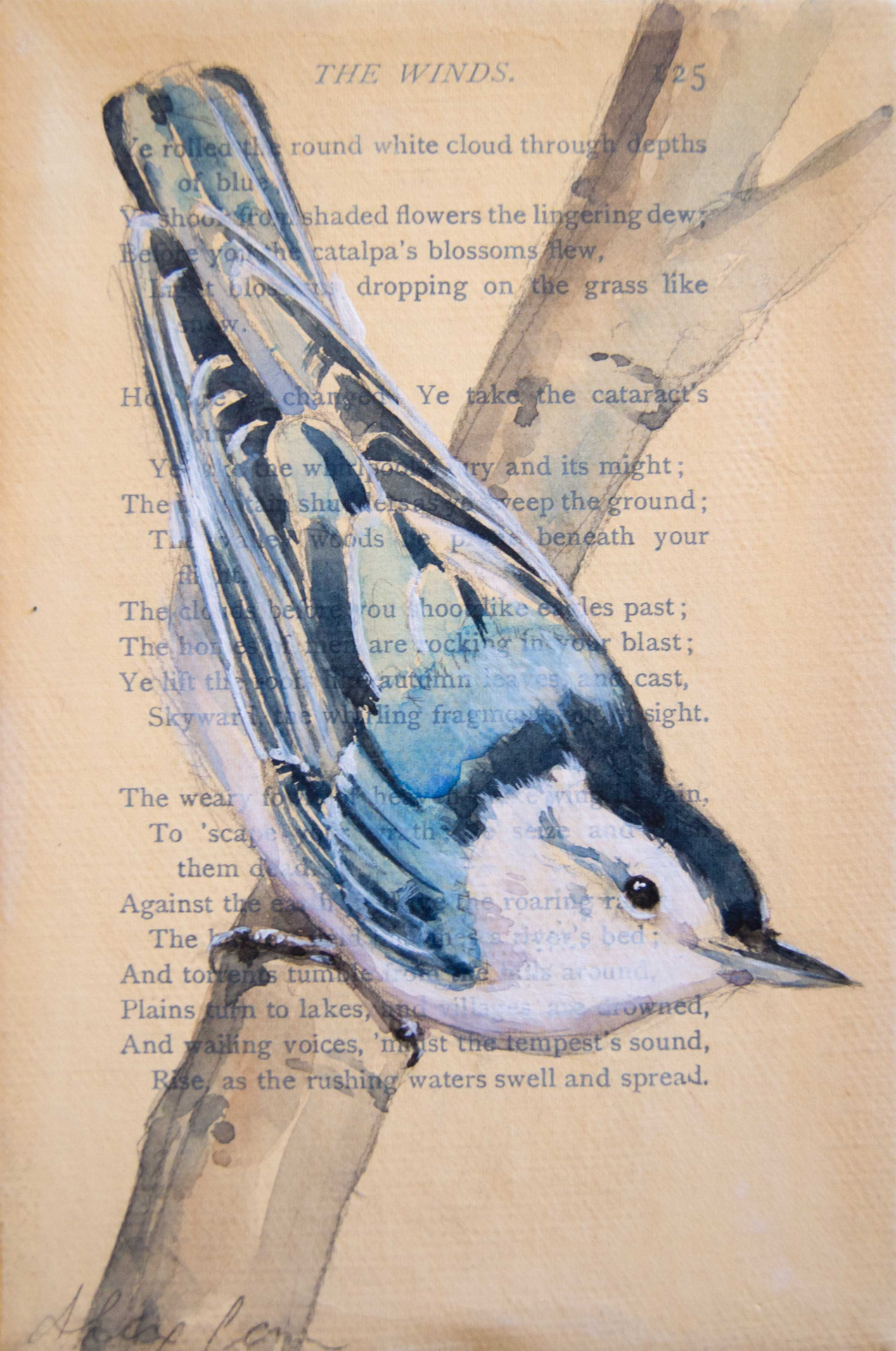 "Nuthatch! 4x6"" watercolor, pencil and gesso on antique book paper/canvas.  He is part of a collection I painted of 25 of the most common avian species in Central Ohio."