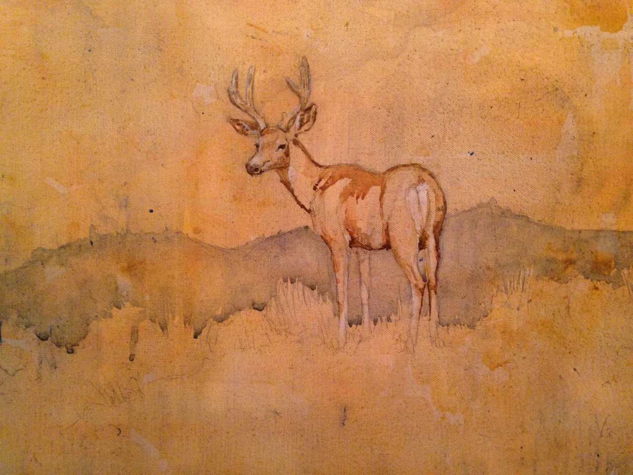 Mule deer, 16x20 acrylic and graphite on canvas.