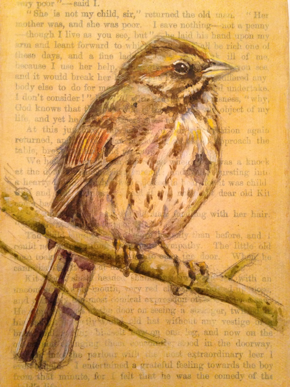 Completed song sparrow.