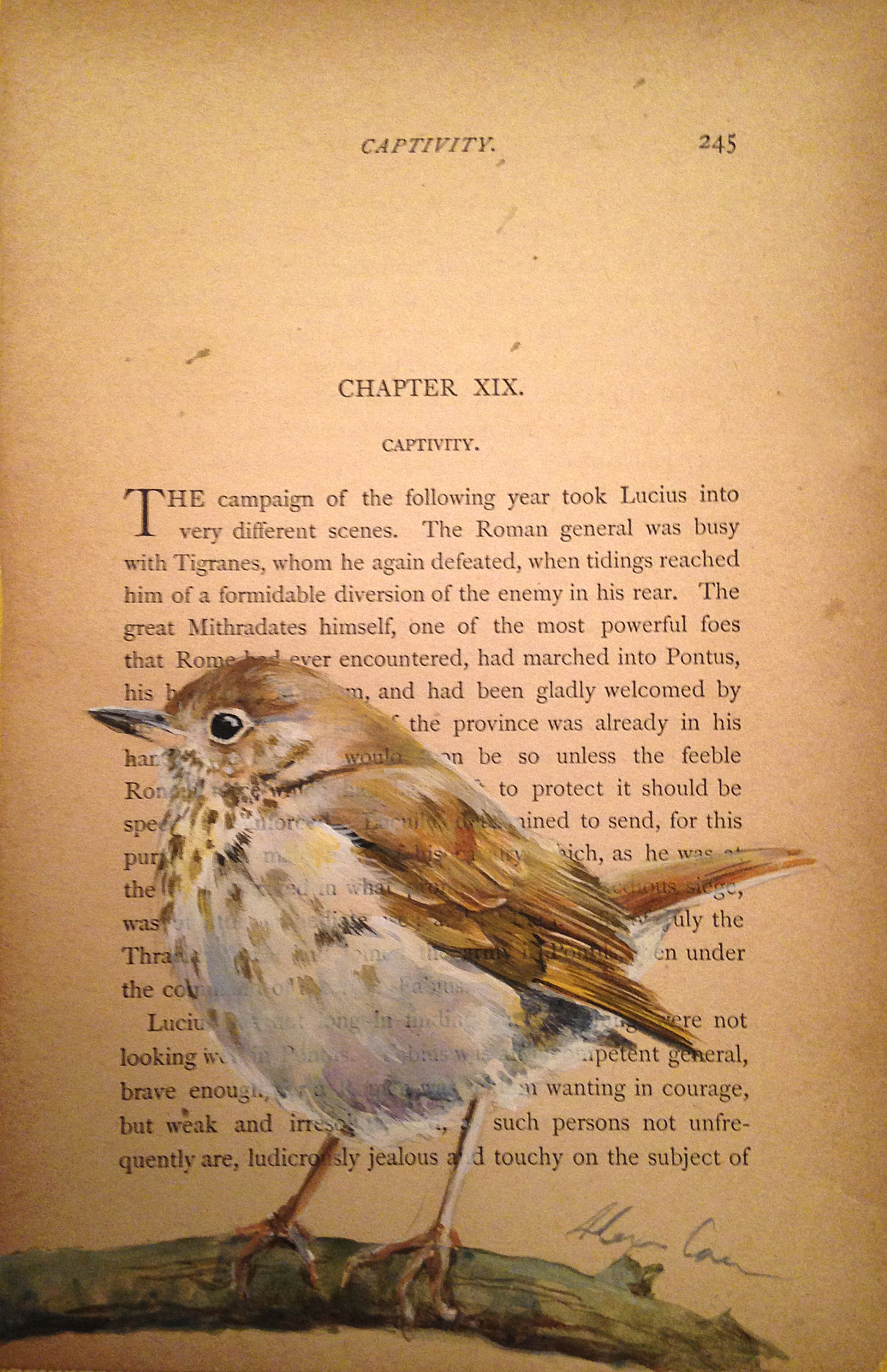 Hermit thrush. Acrylic on antique paper.  I love thrushes! They all have the most beautiful vocalizations. Wood thrushes, in particular have a gloriously musical song.