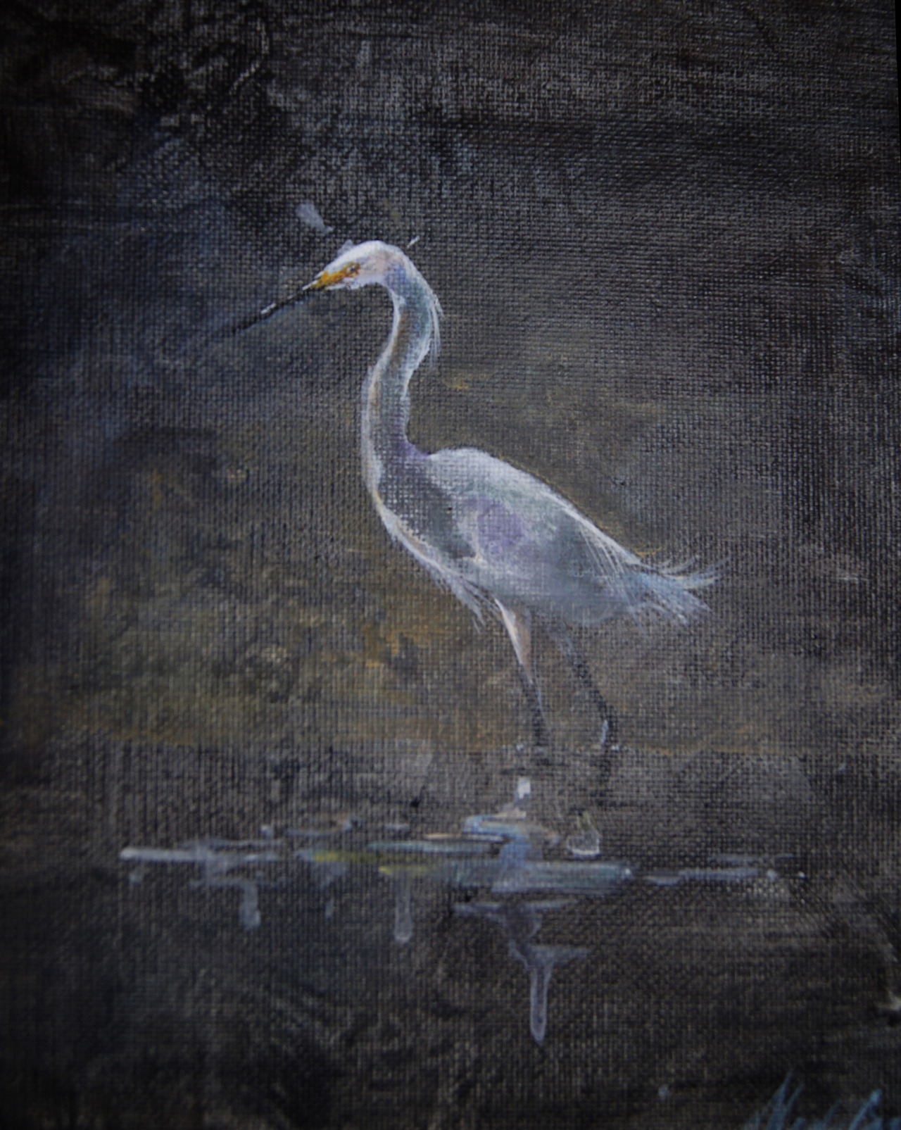 Great Egret 5x7 acrylic on canvas.