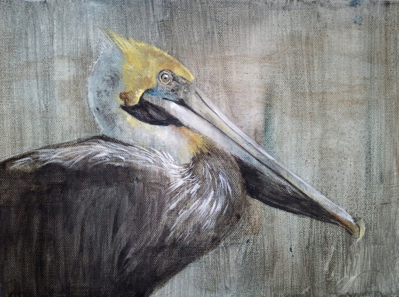 Brown Pelican acrylic painting. I had fun painting this! I usually paint more… normal-looking animals. This guy was just so gorgeous, I had to paint him! He is on 9x12 canvas.