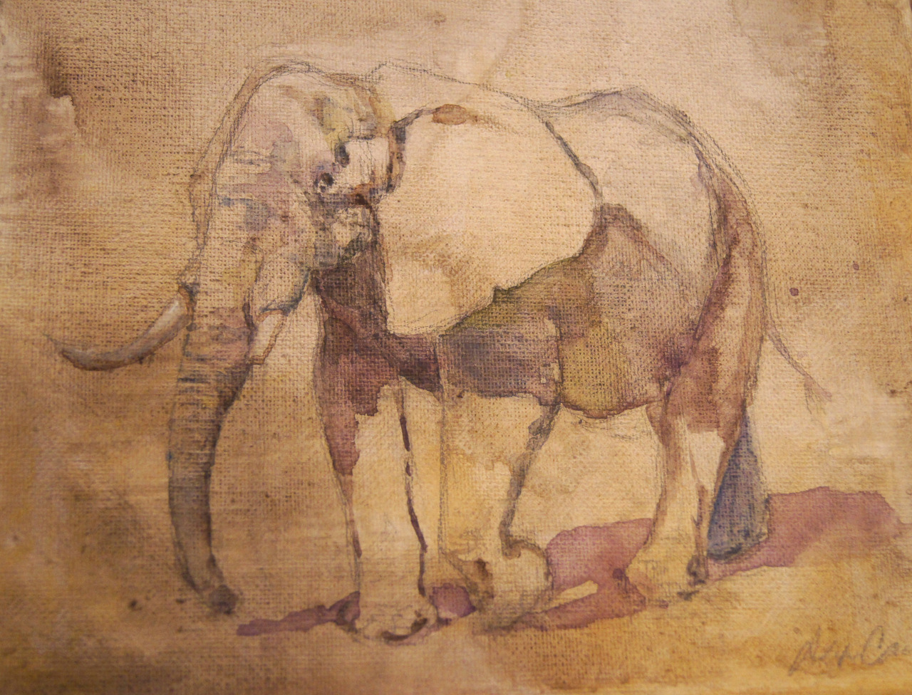 African Elephant! Again, it's a little ways away from my usual bird paintings, but who doesn't like elephants?   I know it looks like watercolor, but it is actually acrylic on canvas. I did a wash for the background, then did a pencil sketch on top of that. Then I filled in the shadow areas with very watered down acrylic. I think I was pretending that it was watercolor. Sometimes I've just got to paint on a canvas! Hence the acrylics!   I sold this fella at the art sale. Or rather, yesterday. A woman was torn between two paintings and bought the egret instead of the elephant. Then she called the day after and asked if the elephant had sold. This may sound silly, but I like it when I know my paintings are going to a good home. It's like… giving up a little part of myself every time I sell or give away a painting. She was thinking about this guy even when she got home, so I know he's a happy elephant now.   I think I've had too much caffeine…