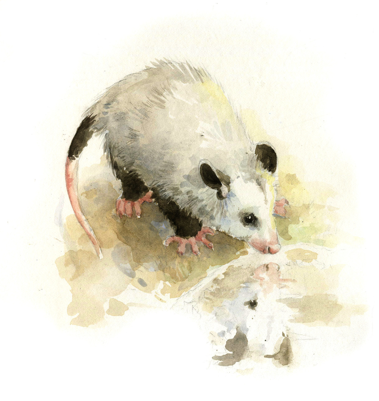 First illustration for my children's book about an opossum who doesn't want to be an opossum anymore.
