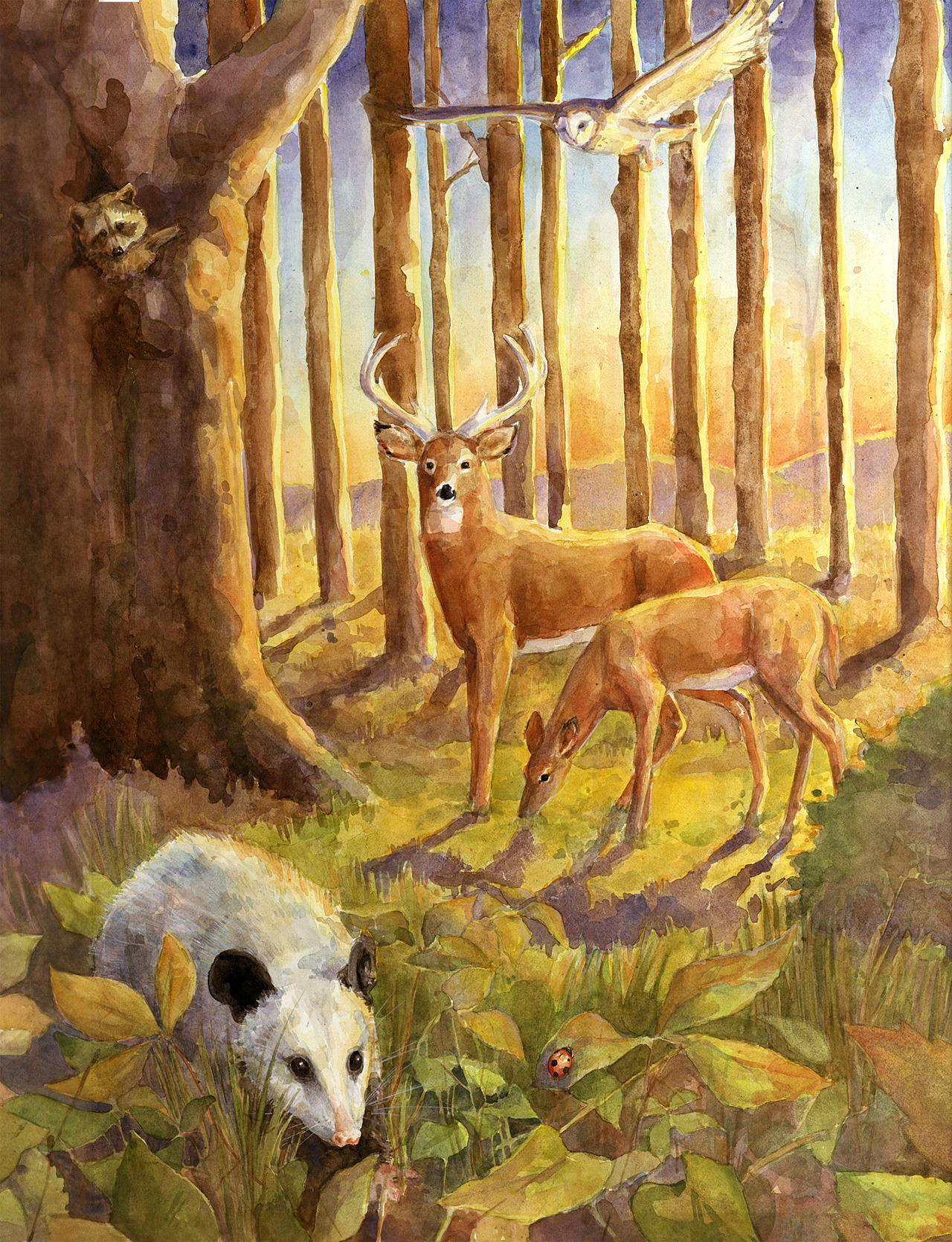 Final illustration for my independent proposal project. I wanted to do a more complex scene with multiple species of animals in the same space. It was inspired by the ecology posters/ illustrations you can find in ecology textbooks and science classrooms. I wanted to do a similar idea- remaining true to the technical aspects of the species (both flora and fauna) while turning to a painterly vs. technical aesthetic. It is set at sunset to add further interest and challenge myself even more.