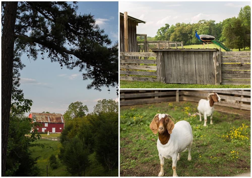 Hodgin-Valley-Farm-002.JPG