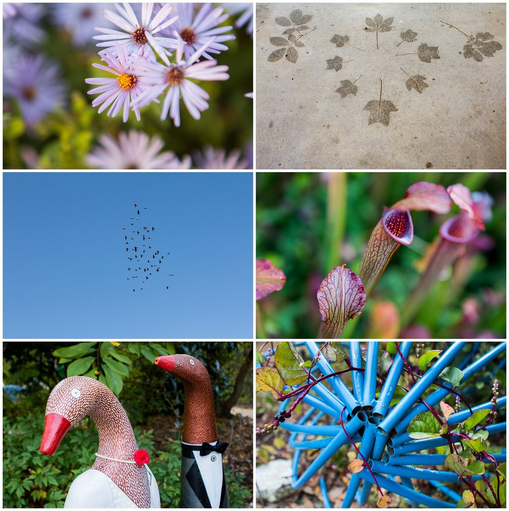 NC-Botanical-Garden-001.JPG