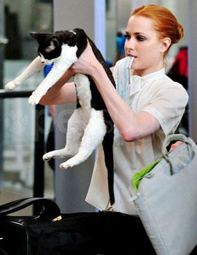 "Happy Birthday to Evan Rachel Wood, honored at the SFIFF52 Midnight Awards in 2009. Photo & fun fact from the Cat Museum of San Francisco: Wood used to take her cat ""Nicodemus"" (seen here at what looks like airport security) on her film shoots but according to a 2011 People Magazine article had to give that up because ""he's the worst traveler ever… I put him in the bag on the plane, and then I fall asleep, and then I always get woken up by a flight attendant with my cat in their arms, looking at me because he's gotten out and is running through the aisles."""