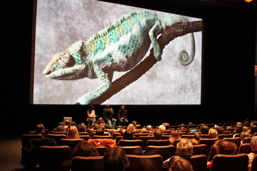 Rango Family Screening