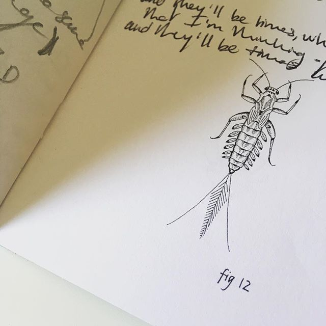 A Mayfly Jotter full of notes and sounds.... #mayfly #jotter #illustration #sounds #notes