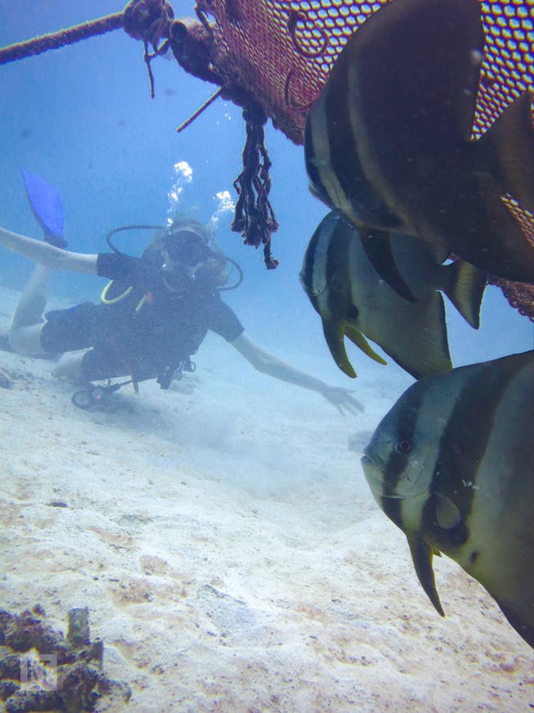 Diving5
