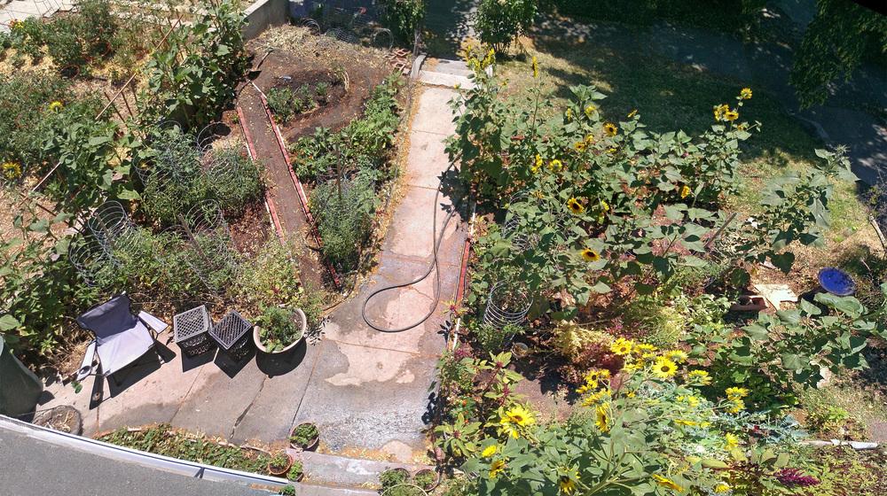 My first garden- later that summer.