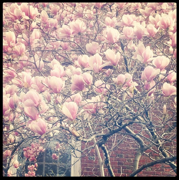 I love Lowell House in the Spring.