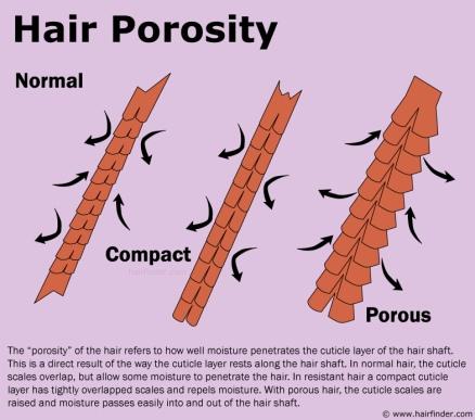 hairporosity.jpg