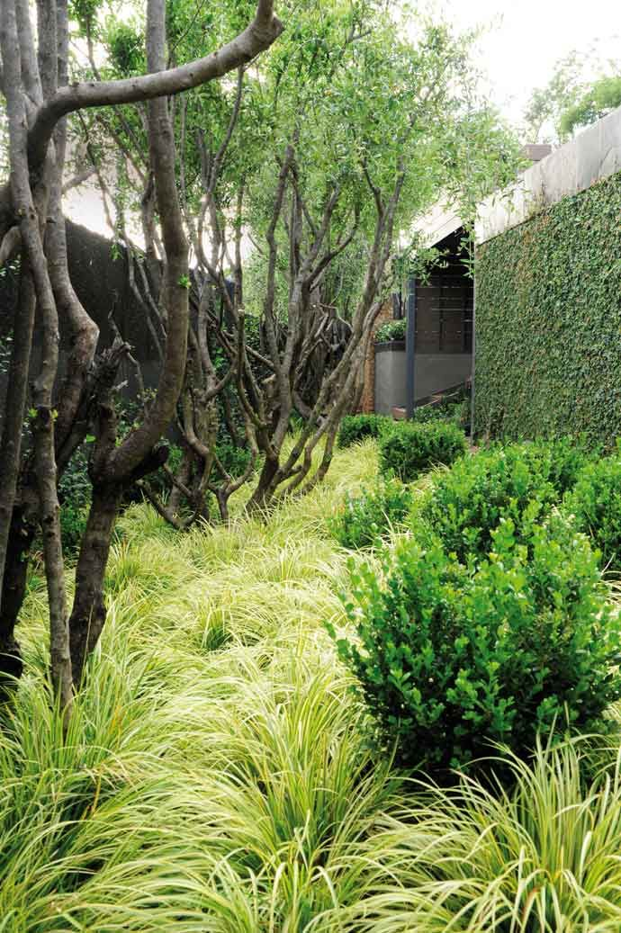 Textured plantings on the floor and creepers on the walls help to absorb sound….