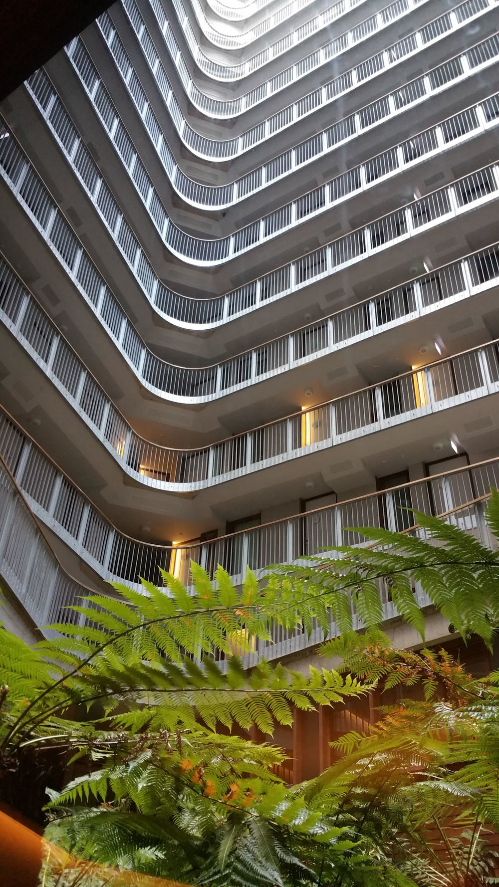The windows of the Hotel are openable to the tree fern filled atrium.