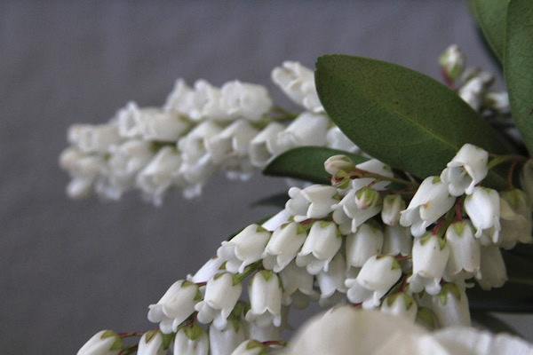 9733f-lilyofthevalleyhoneyofathousandflowers.jpg