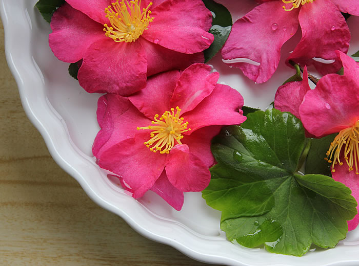 CAMELLIAS FLOATING IN PIE DISH