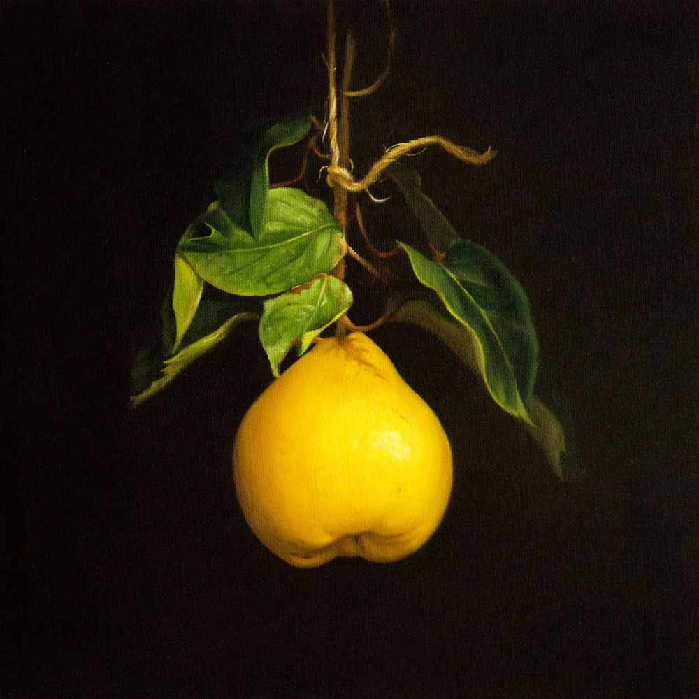 Quince, Oil on Linen, 30x30cm   Private Collection