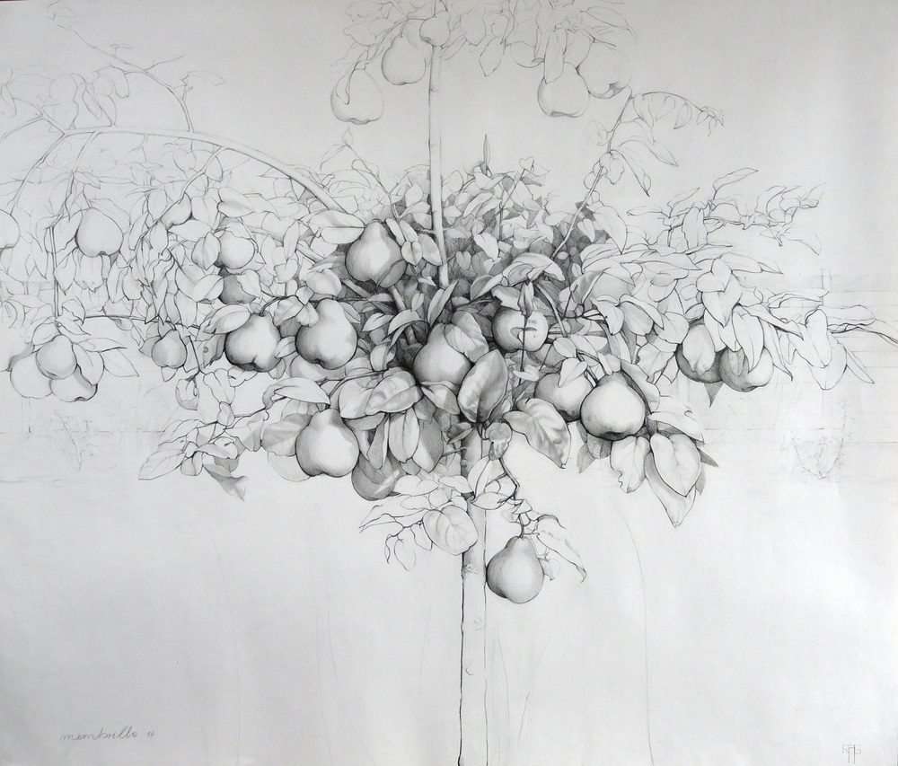 Membrillo I, Graphite on Paper, 104x120cm. Available at The Biscuit Factory   President and Vice Presidents' Choice Award for the Best Work of Art  in the Annual Exhibition Society of Women Artists, Mall Galleries, London, 2016