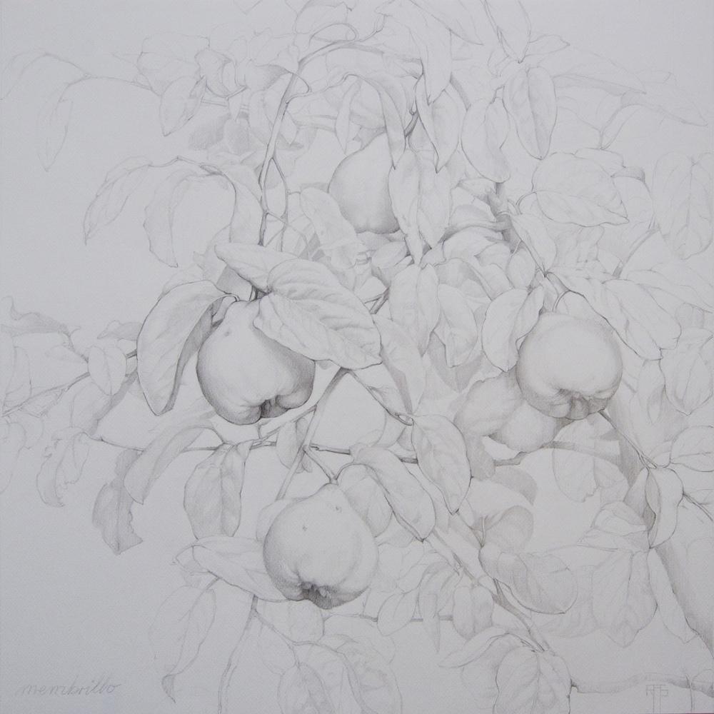 Membrillo IV, Pencil on Paper, 54x54cm