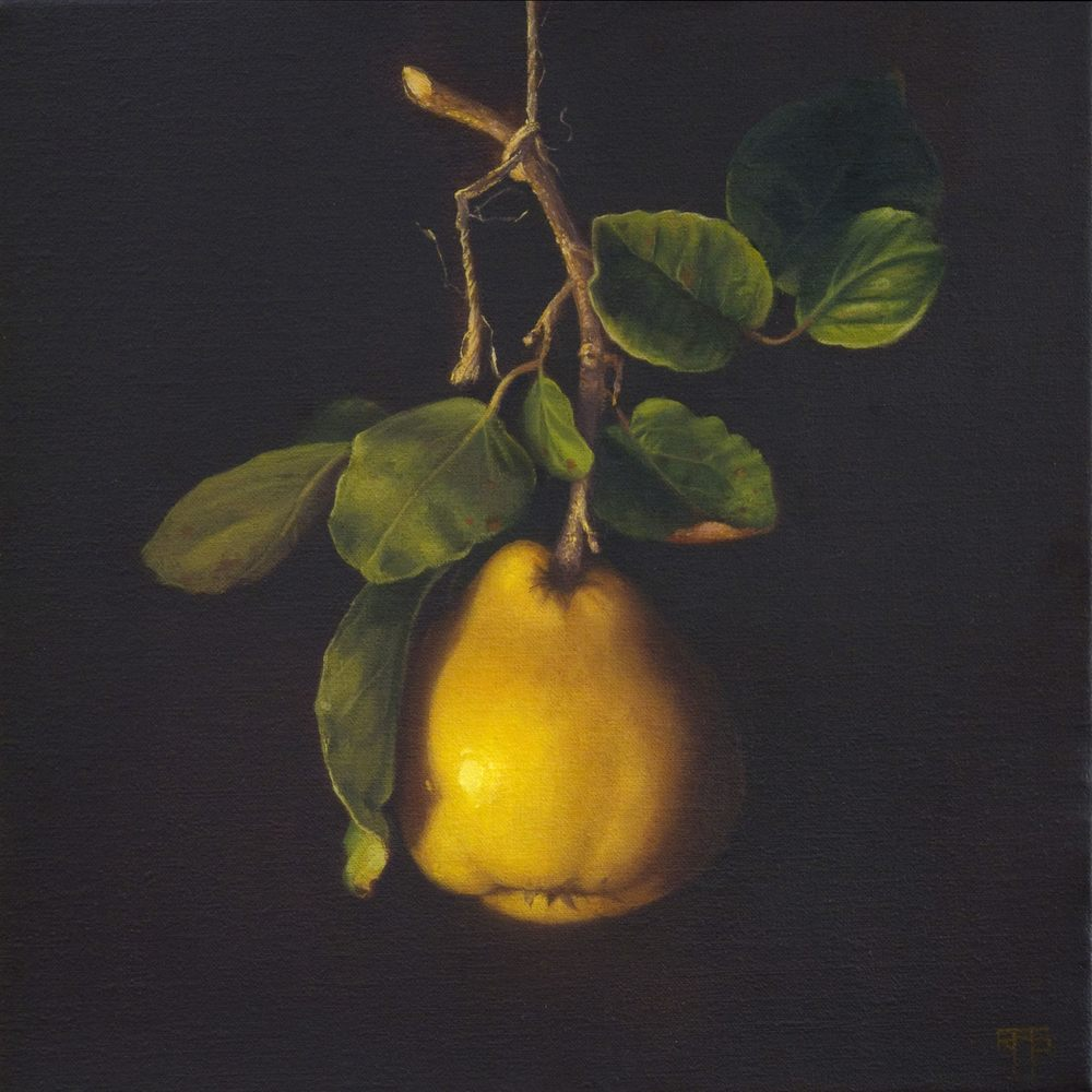 Quince. Oil on Linen. 30x30cm. Private Collection