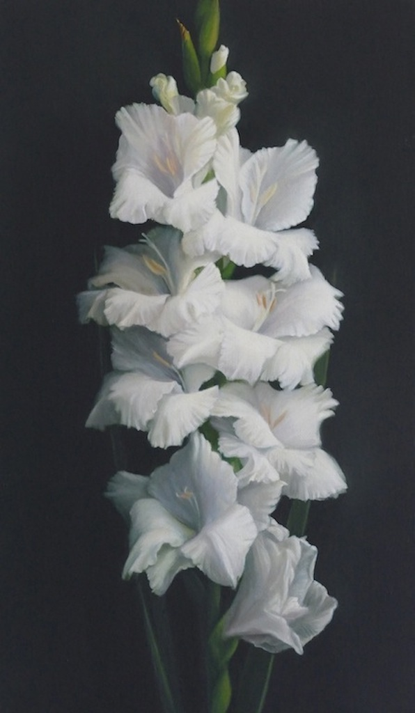 Gladioli.  46x27cm. Oil on linen. Private collection.