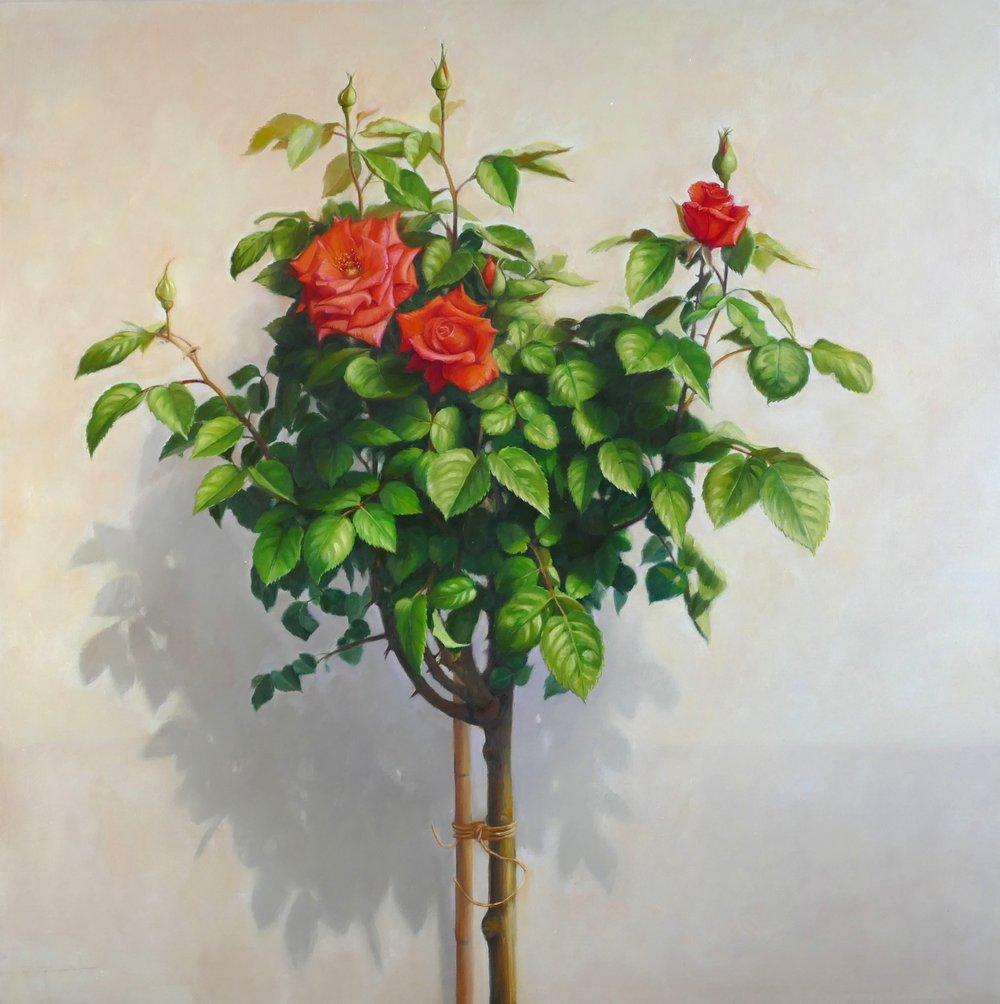 Rose Bush. 80x80cm. Oil on linen. Private Collection