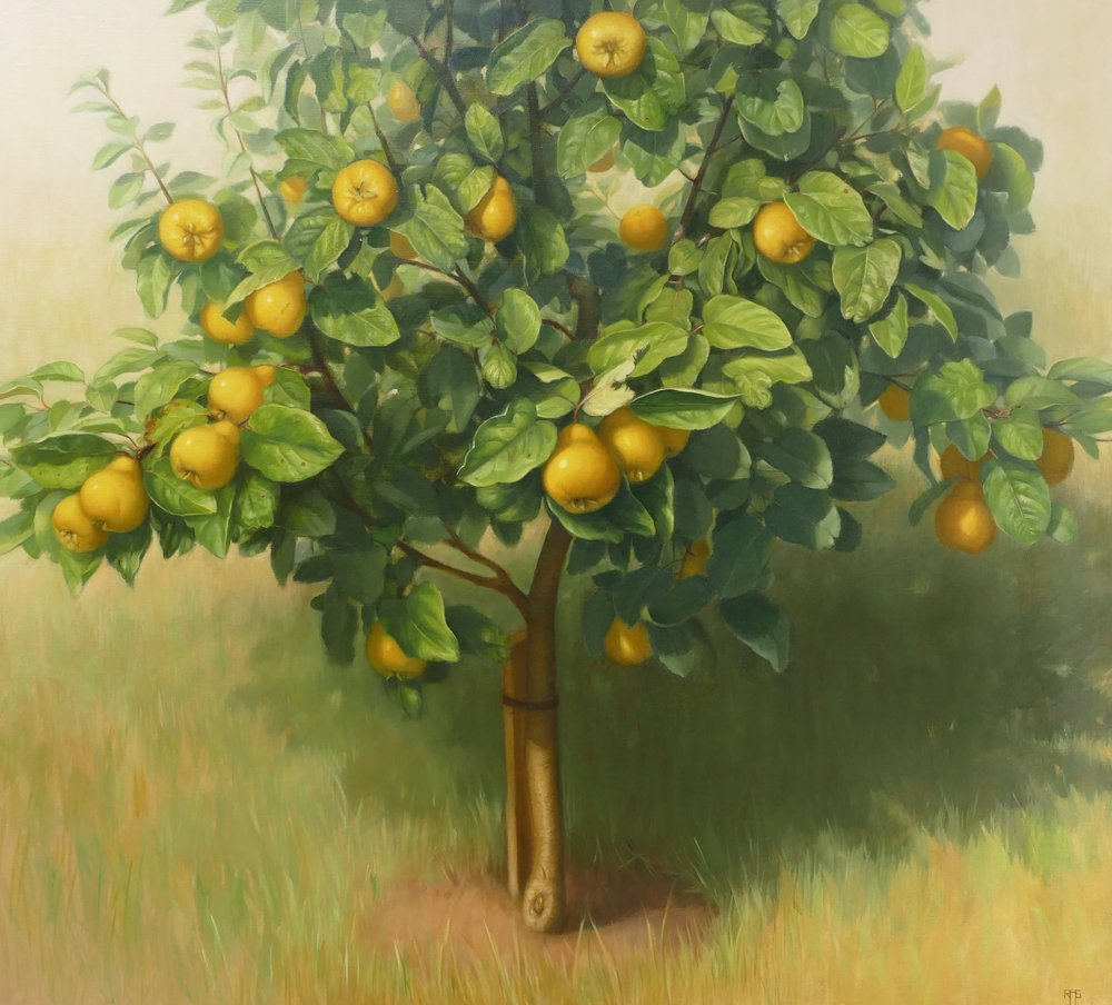 Quince Tree. Oil on linen. 100x110cm