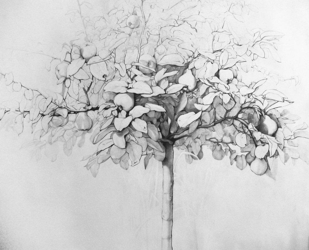 Membrillo II. Graphite on paper. 106x118cm. Private collection
