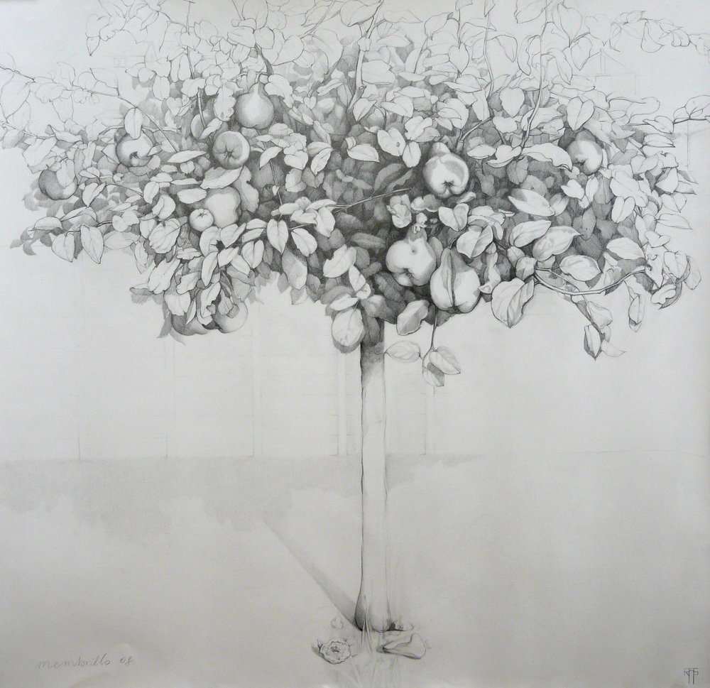 Quince Tree. Graphite on paper. 106x110cm. Private collection