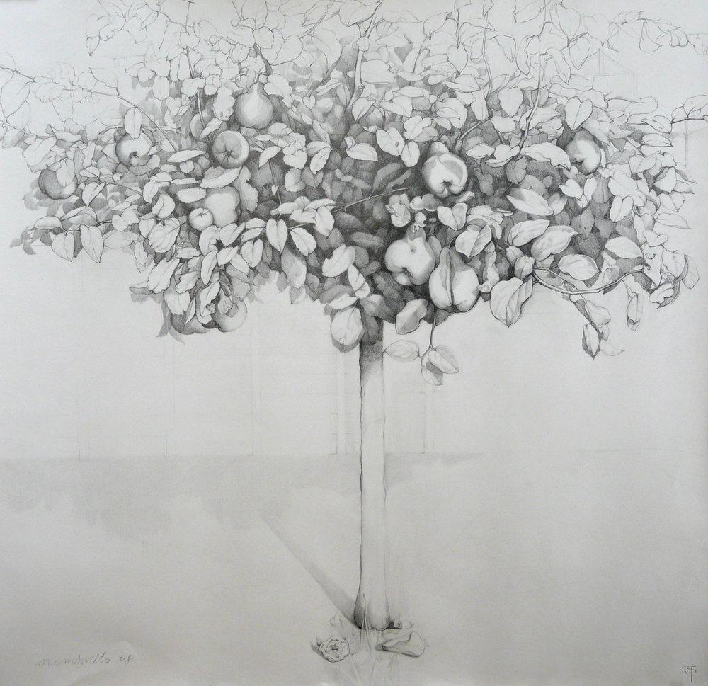 Membrillo III. Graphite on paper. 106x110cm. Private collection