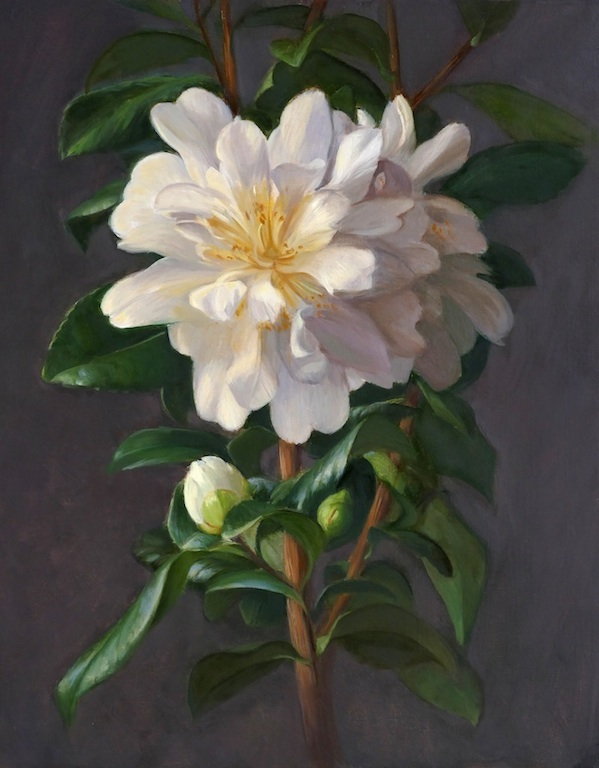 Camelias. Oil on panel. 30x24cm. Available at Concept Gallery