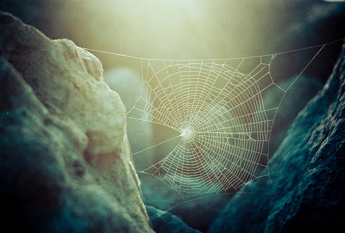 Wolf Spider Web, Photo credit  Mia Mingus 2012