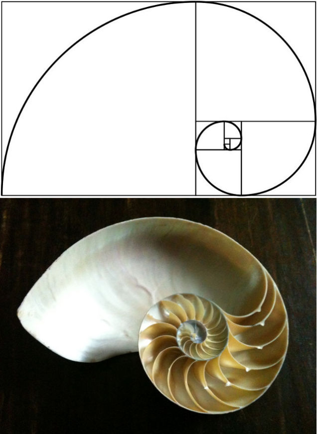 The Golden S piral expressed in a Nautilus shell