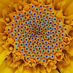Sunflower with Fibonacci sequence imposed