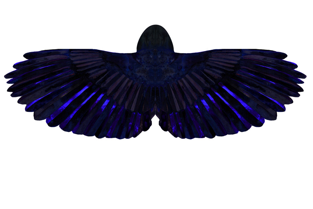 American Crow Cape (Back view)