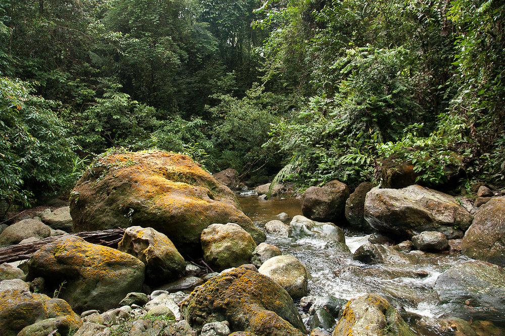 Buluh_River_2010.jpg