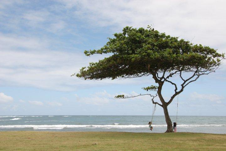 hawaiitree.jpg