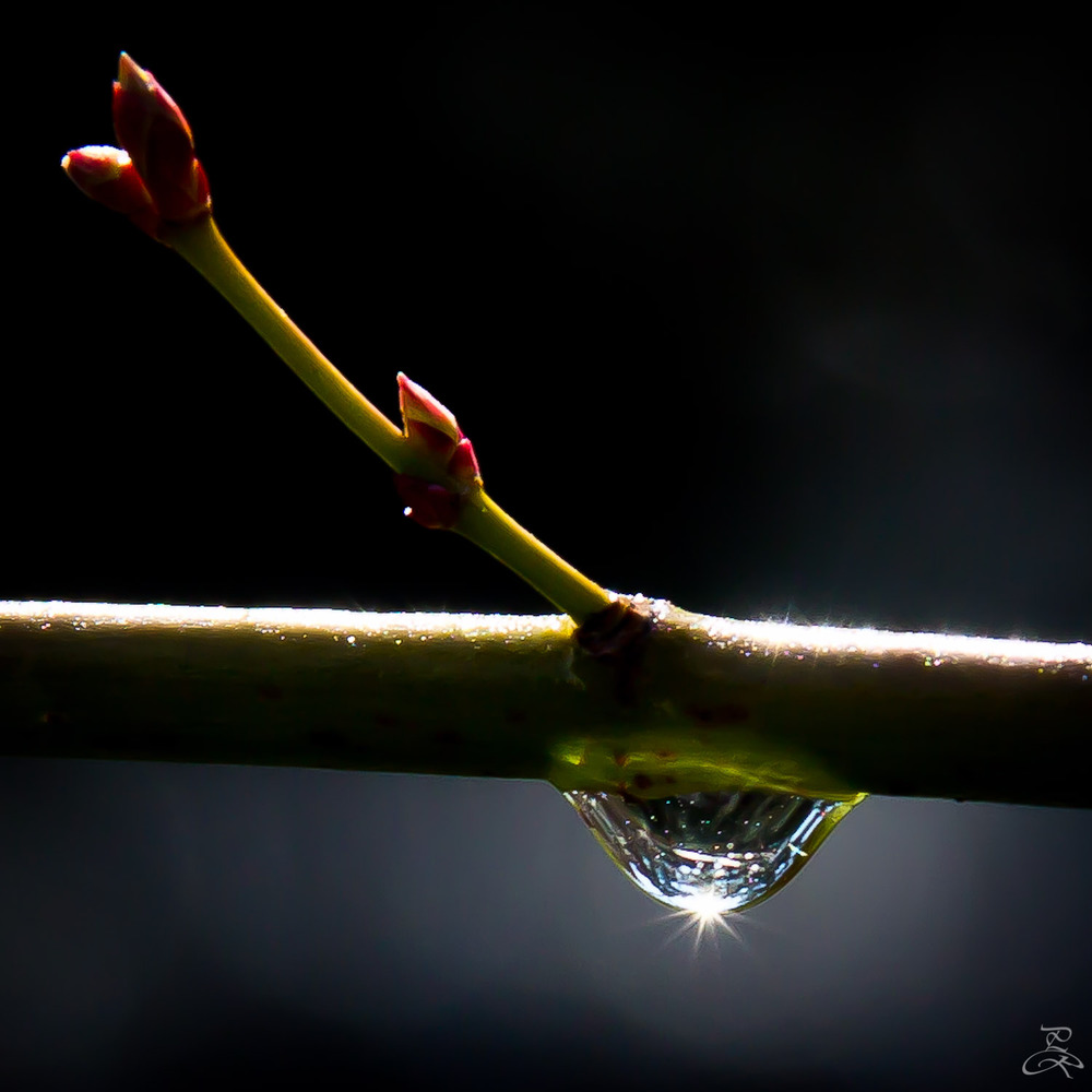 World in a drop of dew, Kyoto, Japan