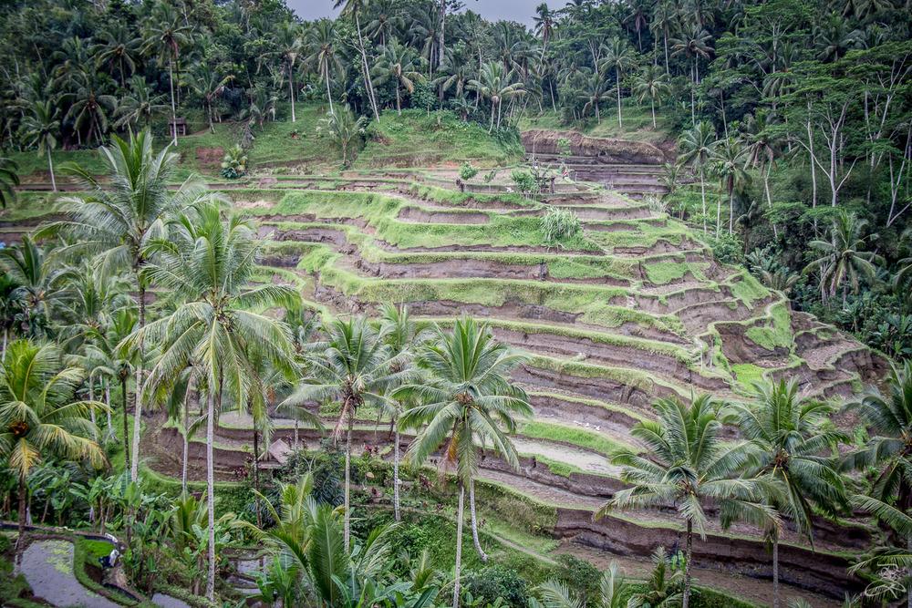 Kintamani, Bali