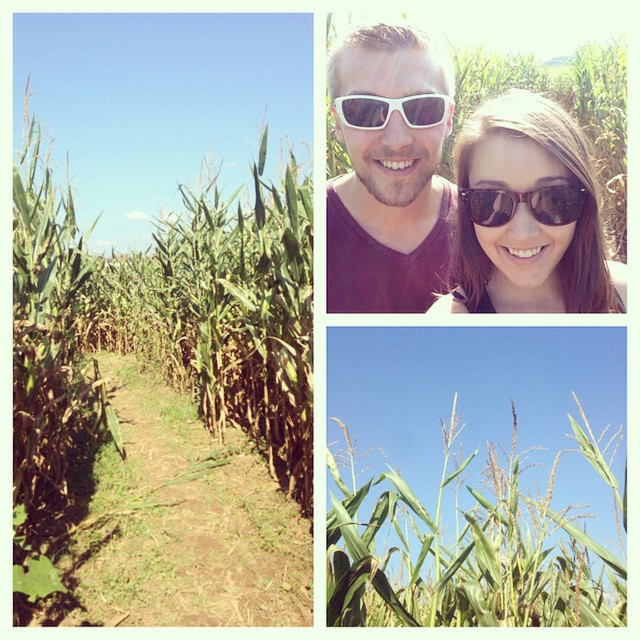 Beautiful day for a corn maze!! 🌽🍁🍂 #cornmaze #laymansfarm #autumn #autumntradition