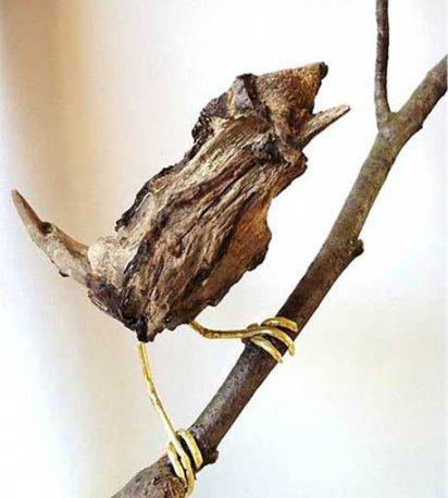 Ian Swales - bird