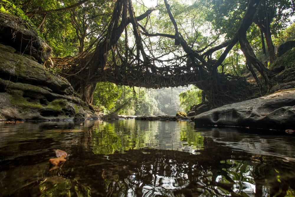 Living Root Bridge in Mawlynnong, Meghalaya, India.