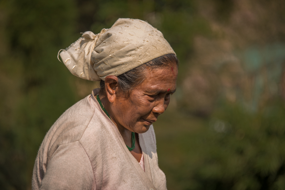 Lady working in tea plantation in India.