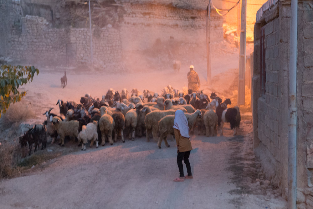 A Qashqai goat herder returns at night.